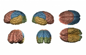 different parts of brain
